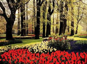 Floral Tulips&trees,Netherlands