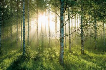 Forest Photo Wall Paper Wallpaper Photomural On A Decor Enterprise